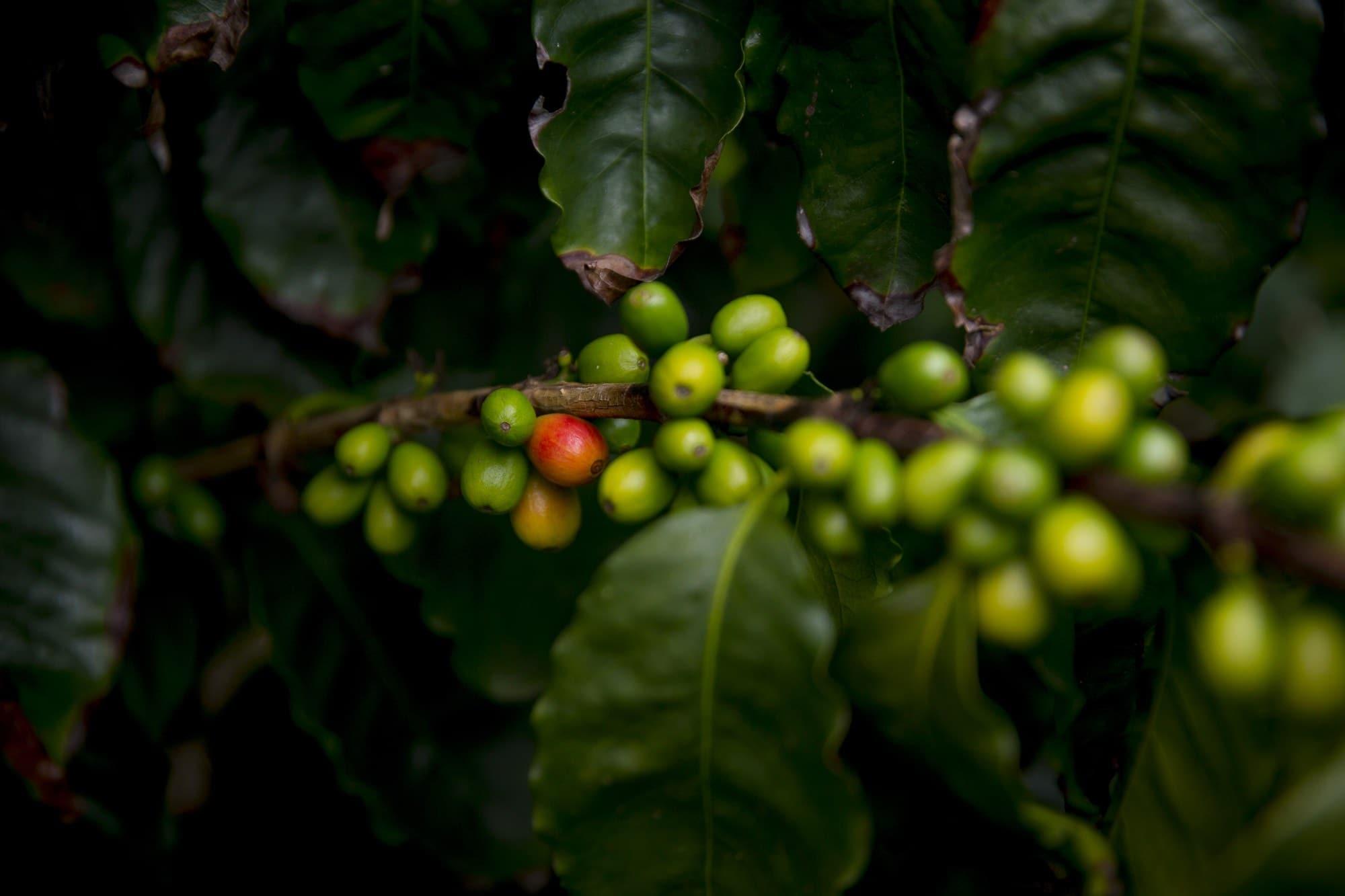 Esternidesign.it - Bacche caffè